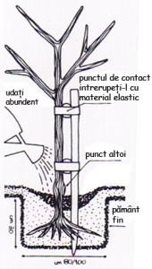 Instrucțiuni de plantare